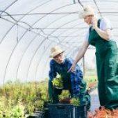 Comprovação de período rural para aposentadoria